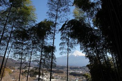 竹ヤブと竹林